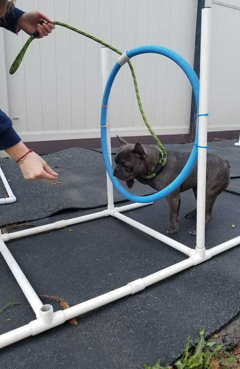 Training a dog to jump through a hoop
