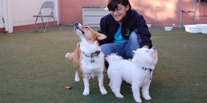 Dog boarding staff with two dogs